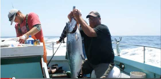 Bodega bay salmon fishing charters for Bodega bay fishing charters